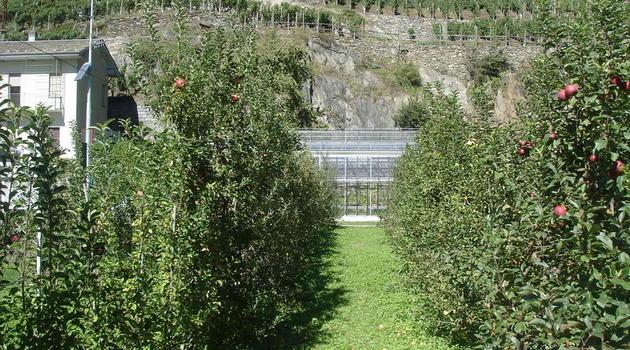 Piante Di Melo : Moria delle piante di melo possibili soluzioni la